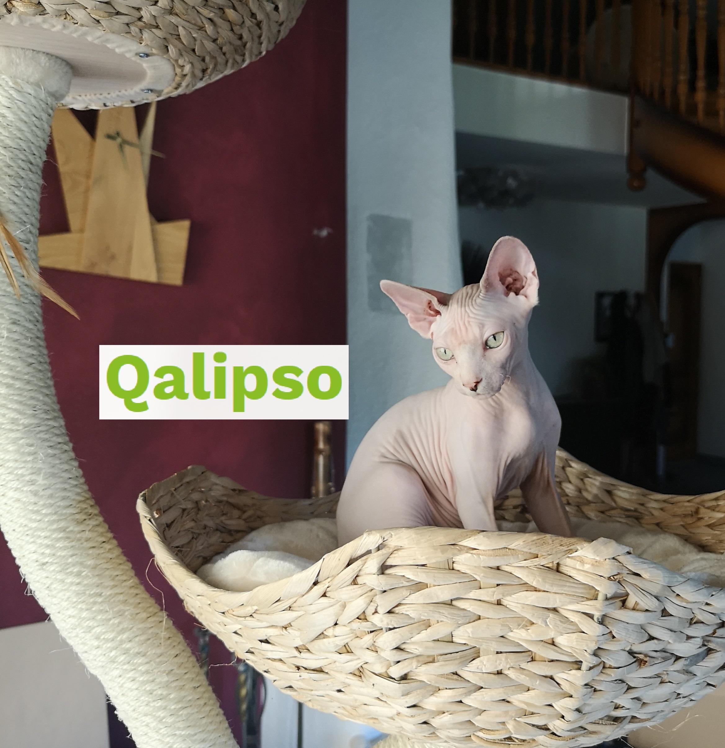 Qalipso